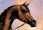 Ramil Gappasov : Arab Horse(1)